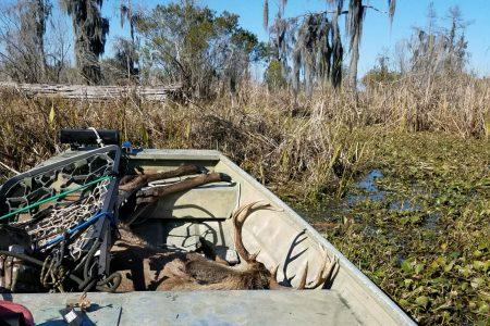 public land swamp bucks