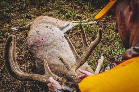 TN velvet buck
